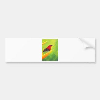 Beautiful Sunbird Painting!  NZ Artist Elena Esina Bumper Sticker