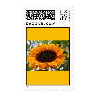 Beautiful sunflower, large yellow borders postage