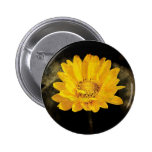 Beautiful Sunflower with Dark Brown Background Pin