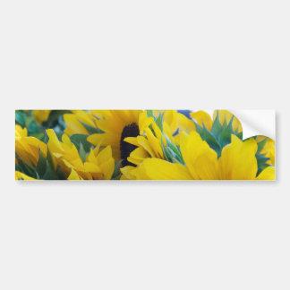 Beautiful Sunflowers Bumper Sticker