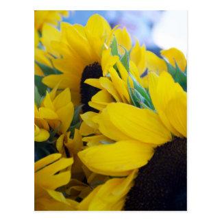 Beautiful Sunflowers Postcard
