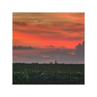 Beautiful Sunset Corn Fields Wrapped Canvas