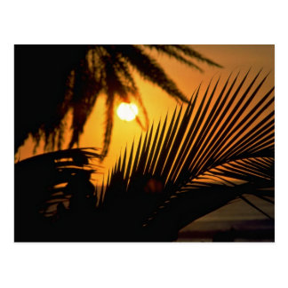 Beautiful Sunset: Kona, Hawaii Postcard