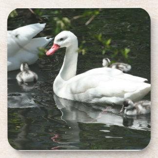 Beautiful Swan Family Coaster Set