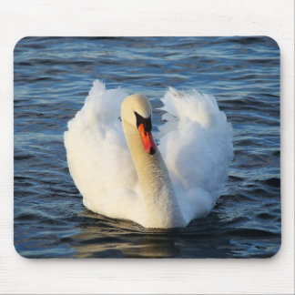 Beautiful swan in water mouse pad