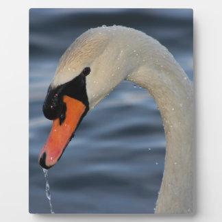 Beautiful Swan in Water Plaque