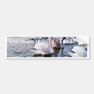 Beautiful Swans In River Car Bumper Sticker