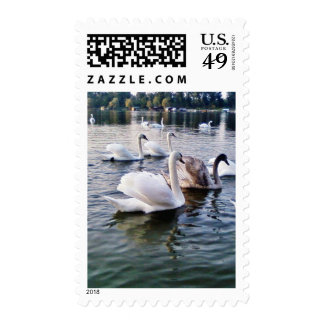 Beautiful Swans In River Stamps