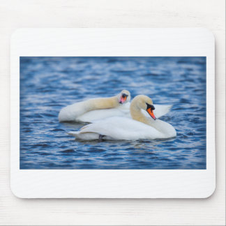 Beautiful Swans on a Lake Enjoying the Day Mouse Pad