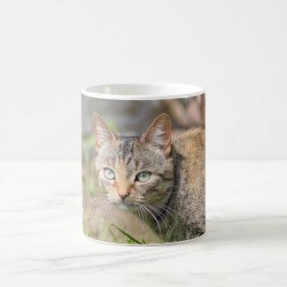 beautiful tabby cat mug