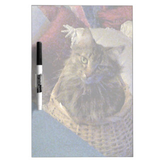 Beautiful Tabby Maine Coon Kitty Cat in a Basket Dry-Erase Whiteboards