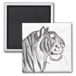 Beautiful Tiger drawing magnet