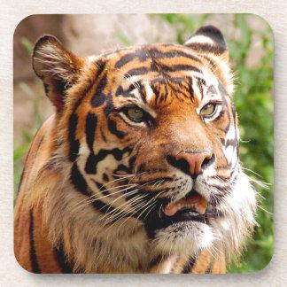 Beautiful tiger face beverage coaster