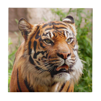 Beautiful tiger face ceramic tile