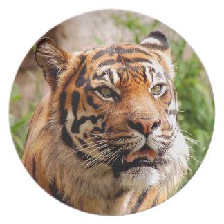 Beautiful tiger face plate
