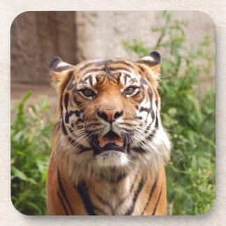 Beautiful tiger face print drink coaster