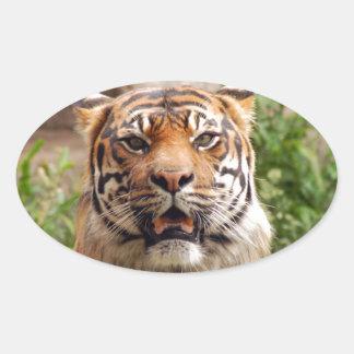 Beautiful tiger face print oval sticker