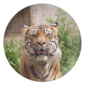 Beautiful tiger face print plate