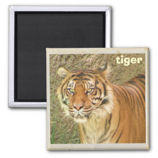 Beautiful Tiger Magnet! Magnet