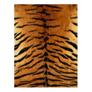Beautiful Tiger Pattern Postcard