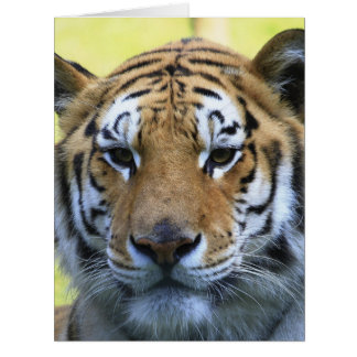 Beautiful tiger portrait card