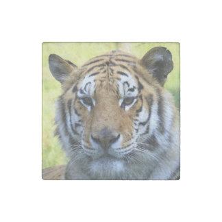 Beautiful tiger portrait stone magnet