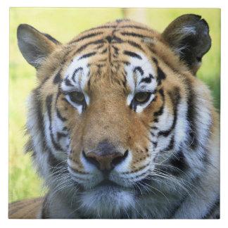 Beautiful tiger portrait tile