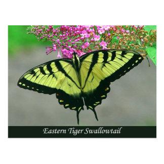 Beautiful Tiger Swallowtail Butterfly Postcard 5