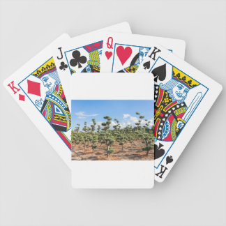 Beautiful topiary shapes in conifers bicycle playing cards