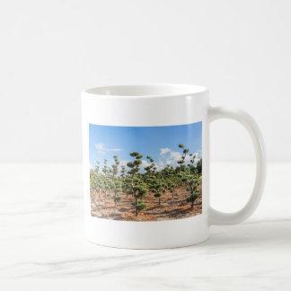 Beautiful topiary shapes in conifers coffee mug