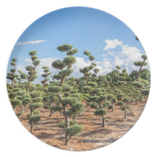 Beautiful topiary shapes in conifers dinner plate