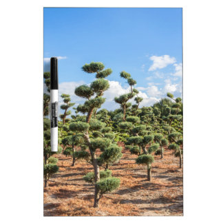 Beautiful topiary shapes in conifers Dry-Erase board