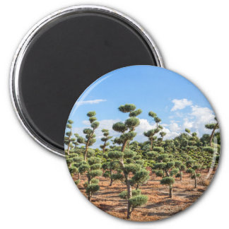 Beautiful topiary shapes in conifers magnet