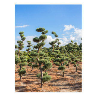 Beautiful topiary shapes in conifers postcard