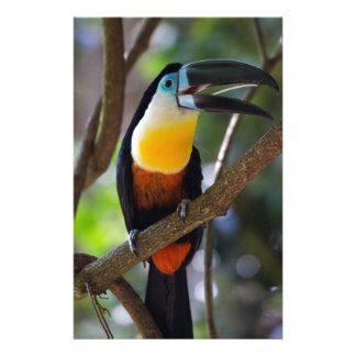 Beautiful toucan bird in a tree nature scenery stationery