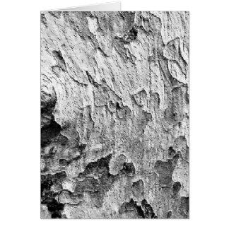 Beautiful Tree Bark Photography Card
