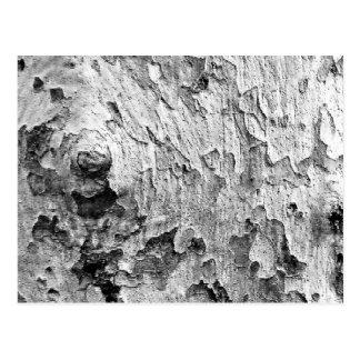 Beautiful Tree Bark Photography Postcard