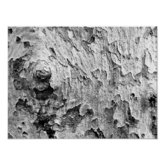 Beautiful Tree Bark Photography Poster