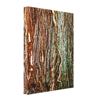 Beautiful Tree Bark Texture Stretched Canvas Prints