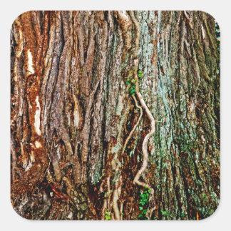 Beautiful Tree Bark Texture Square Sticker