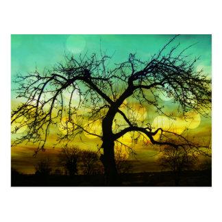 Beautiful Tree Silhouette at Sunset Ombre Aqua Postcard