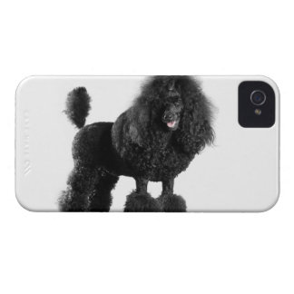 Beautiful, trimmed, black, complete poodle body iPhone 4 cases