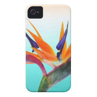 Beautiful Tropical Bird of Paradise Flower iPhone 4 Case-Mate Case