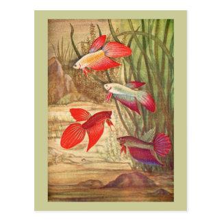 Beautiful Tropical Fish Postcard Postcards