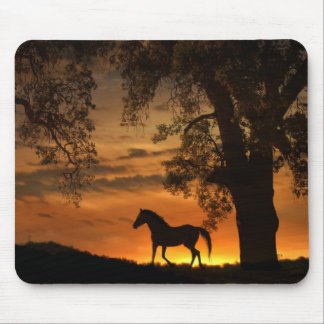 Beautiful Trotting Horse in the Sunset Mouse Pad