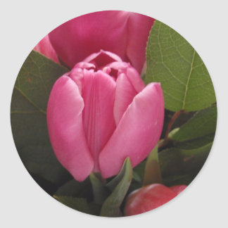Beautiful Tulip Classic Round Sticker