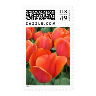 Beautiful Tulips in Holland Stamp