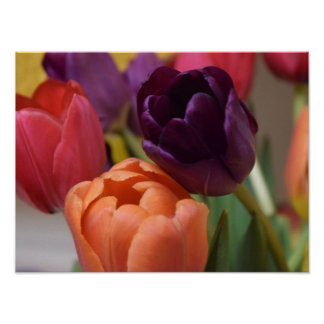 Beautiful Tulips Poster