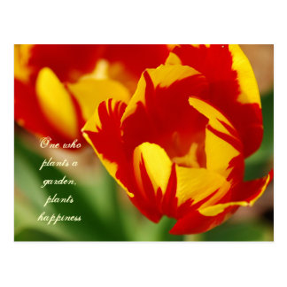 Beautiful Tulips with Proverb Postcard