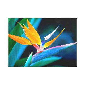 Beautiful Unique Bird of Paradise Canvas Canvas Print
